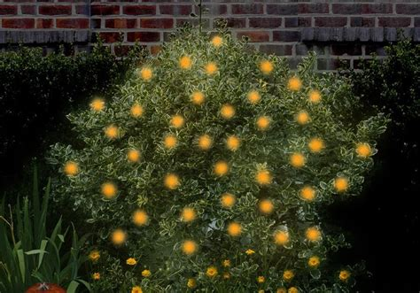 As Seen On Tv Infomercial Products Asseenontvguys Com Orange Solar String Lights