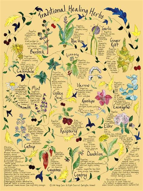 herbs chart enchanted cauldron traditional healing herbs
