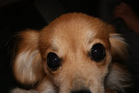 puppy mills near me dogs up for adoption near me pets world