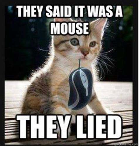 Cute Kitten Memes - cute kitten meme with quot mouse quot cat memes pinterest