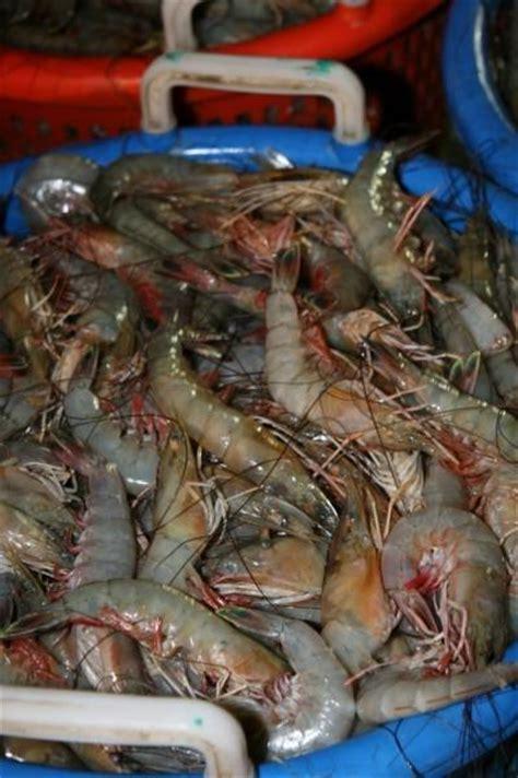 kenricks shrimp boat coast guard seizes illegally harvested shrimp newswatch