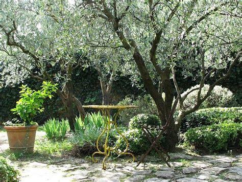 tips  create  mediterranean garden mediterranean