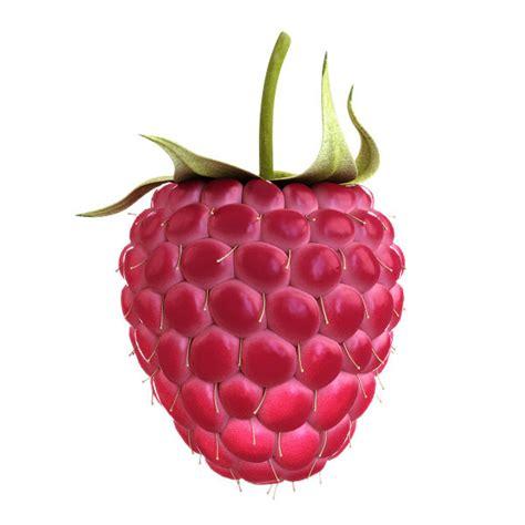 3d Raspberry realistic raspberry 3d model