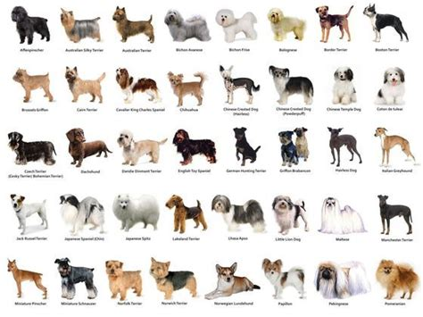 which breed are you which breed are you