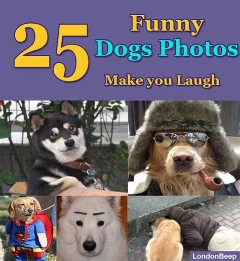 5 Silly Things To Make You Laugh by 25 Dogs Photos To Make You Laugh Beep