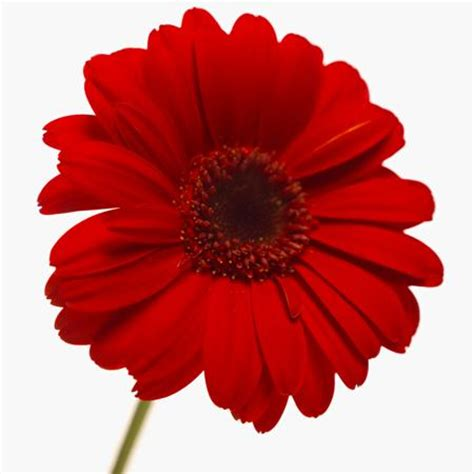 flower color meaning understanding the symbolism and meaning of the color of