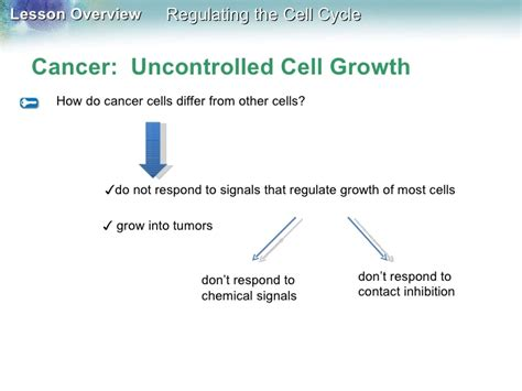 section 10 3 regulating the cell cycle answers chapter 10 cell growth and division worksheet key cell