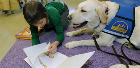 assistance dogs canine companions for independence providing assistance dogs for those in need part