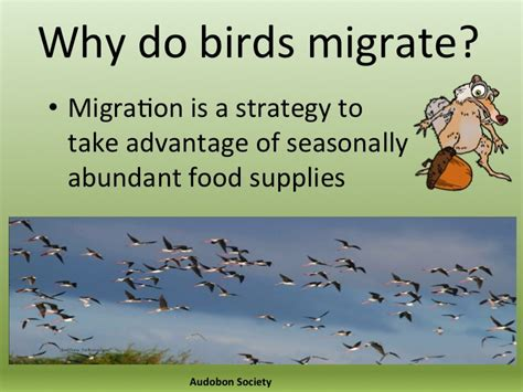 philippines as a migratory flyway ebon