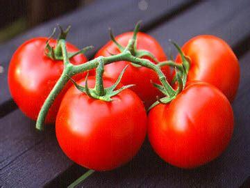 Obat Ubi Q ubi dan tomat obat alami jerawat