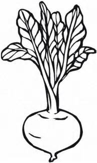 beet color corn stalk coloring page cliparts co