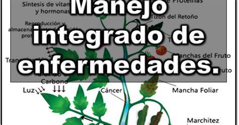 149407 Enfermedades De Las Plantas Cultivadas Libros by Libros Y Noticias De Agronomia Manejo Integrado De