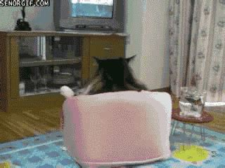 cat on chair gif best of week cat gif by cheezburger find on giphy