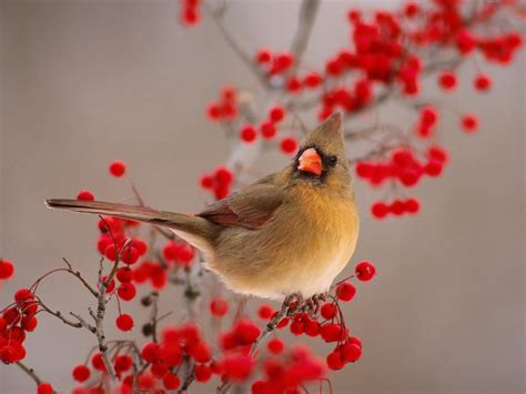 beautiful small birds wallpapers entertainment only beautiful small birds wallpapers entertainment only