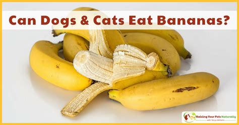 can dogs eat banana healthy food for pets archives raising your pets naturally with tonya wilhelm