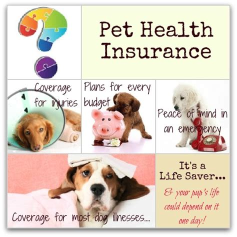 health insurance for dogs choosing the best insurance