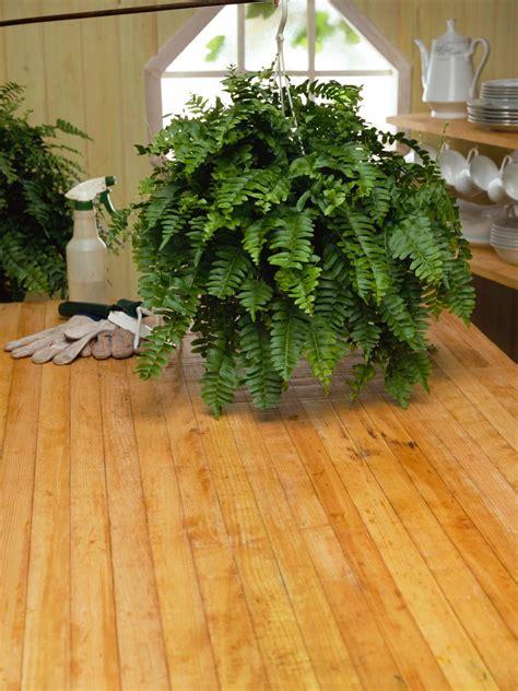 large floor house plants