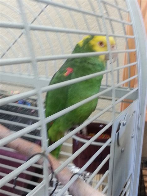 az exotic bird rescue mobile bird grooming llc
