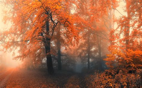 20 Forest Backgrounds Wallpapers Free Creatives Free Pictures For
