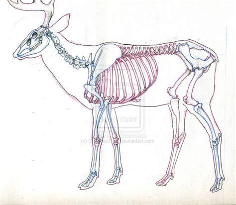 elk anatomy diagram deer skeleton diagram search animal poses for