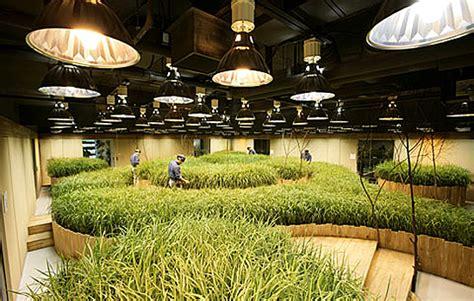 pruned  subterranean farms  tokyo