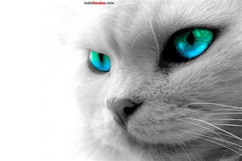 imagenes de ojos verdes de gatos gato de ojos azules y verdes 7