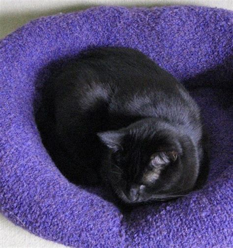 is your bed made is your sweater on how to turn a sweater into a pet bed the owner builder network