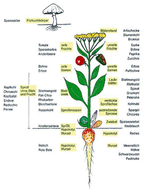 Beschriftung Kartoffelpflanze by Gem 252 Se Was Ist Das Eigentlich April 2006
