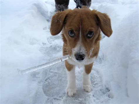 winter puppy top 5 friendly winter hikes near denver woof in boots