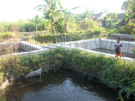Pakan Larva Ikan Nila pakan alternatif untuk benih ikan nila benih ikan