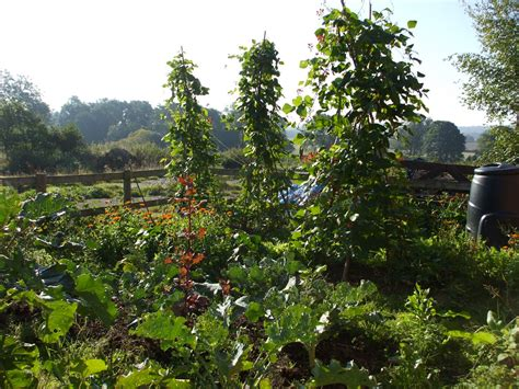 oak house permaculture going perennial in the vegetable