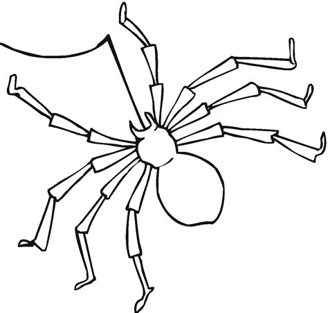 spider outline coloring page free coloring pages of a spider
