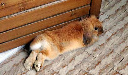 coniglio nano alimentazione l alimentazione coniglio nano vita in cagna