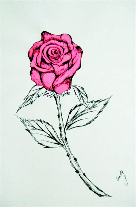 Pink Sketches by Pink Drawing Clip Library