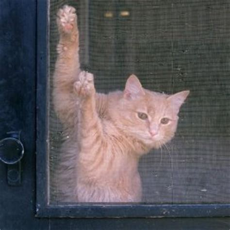 How To Stop Cat From Scratching Door by Keeping Cats From Scratching Screen Doors Thriftyfun