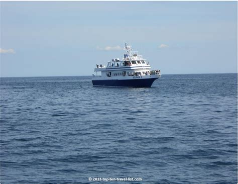 cape cod boat trips tips for a great whale watching trip top ten travel