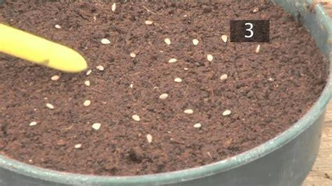 plant seeds  pots gardening ideas tips