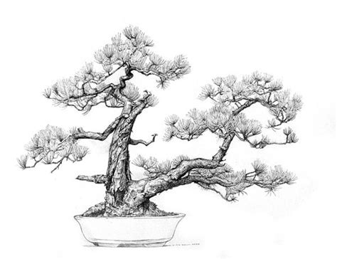 66 best images about bonsai drawing on bonsai trees tree drawings and dibujo 66 best images about bonsai drawing on bonsai trees tree drawings and dibujo