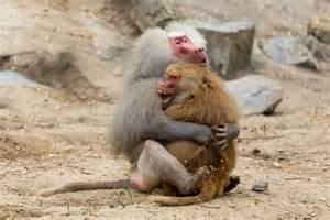 Monkey love monkey love by dj p3tros