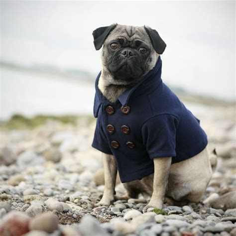 different pug breeds all list of different dogs breeds pug small breeds