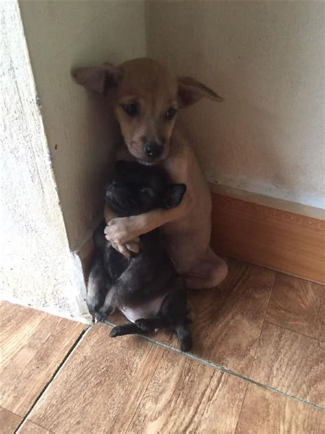 wont stop paw rescued puppies won t stop hugging each other