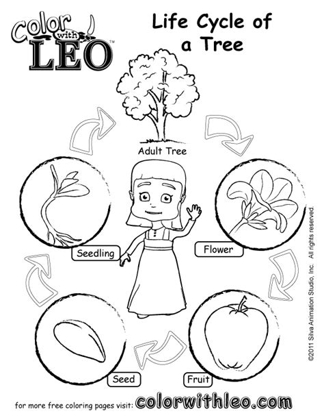 plants coloring pages preschool life cycle of a plant coloring pages for kindergarten