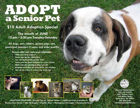 senior dogs for adoption sonoma county senior pet adoption special