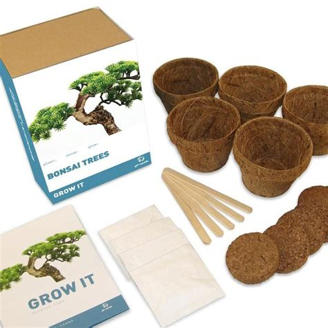 grow your own tree kit grow your own bonsai tree kit find me a gift