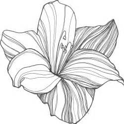 Drawings Of Lotus Flower Lotus Flower Drawing Sketch Clipart Best