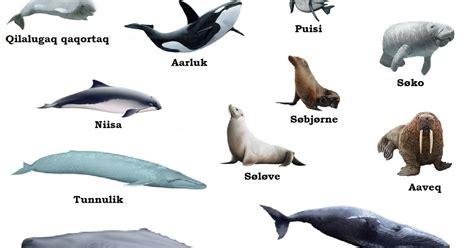 eskimo land greenlandic sea mammals