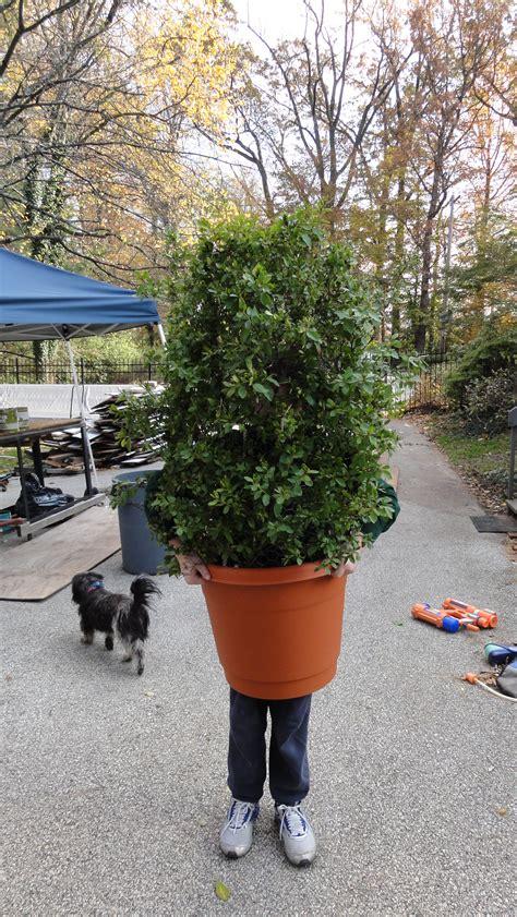 shrub bush plant costume  steps  pictures