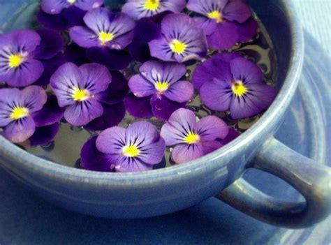 fiori pensiero viola pensiero viola tricolor piante annuali