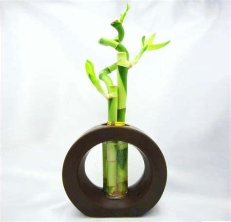 Vase For Bamboo Plant by Lucky Bamboo Plant Room Room Decorating Ideas Home