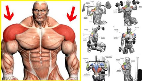 building how to build up your shoulders all